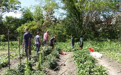Crops, Cows, and the Children's Garden: The Agriculture Program of NPH Bolivia