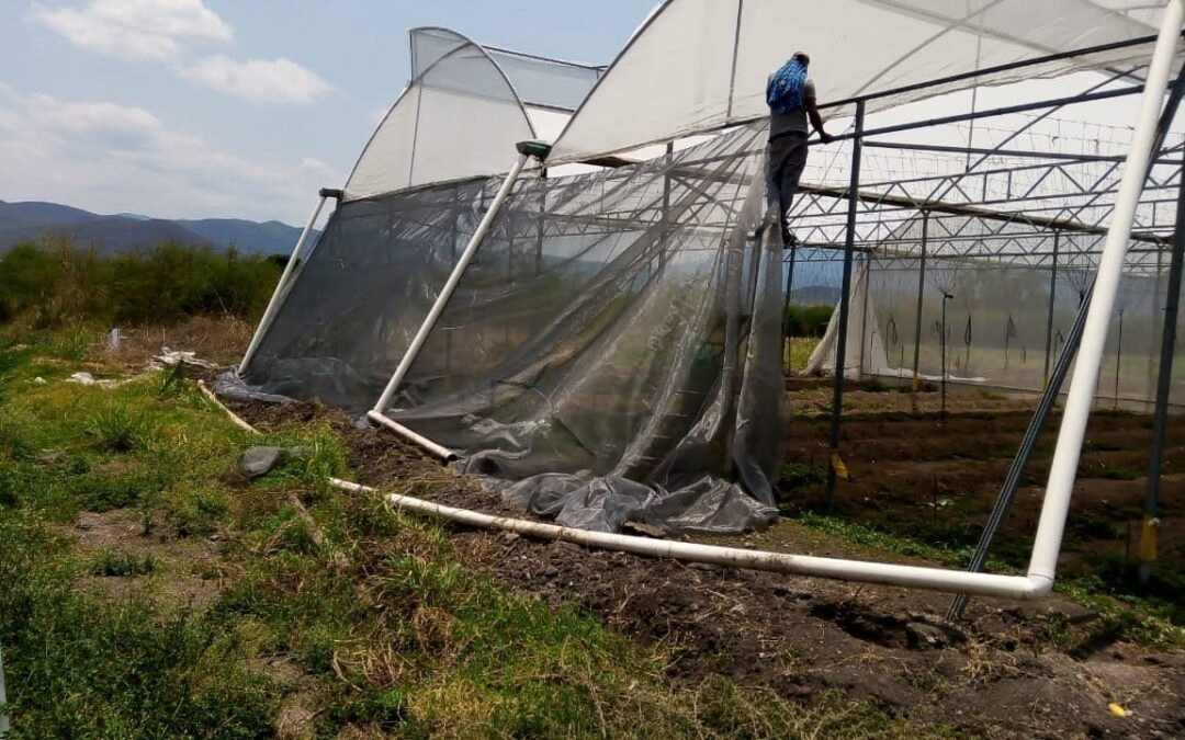 NPH Mexico: Food Production Recovers from Storm Damage